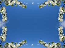Frame from white colour on background blue sky. Spring frame for postcard from white colour on background blue sky Royalty Free Stock Photo