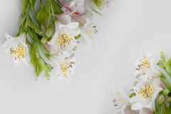 Frame from white flowers alstroemeria with space for text.  Stock Images