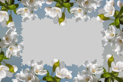 Frame white flowers apple tree Royalty Free Stock Images