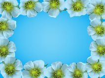 Frame of white flowers. Royalty Free Stock Photos