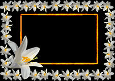 Frame from white lily Stock Photos