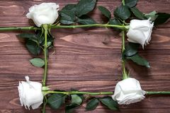 Frame of white long roses on the wooden surface. Original idea of organic gift Stock Image