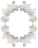 Frame of white orchids. The oval frame of white orchids Stock Photography
