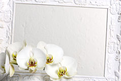 Frame with white orchids Stock Photo