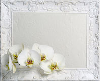 Frame with white orchids Royalty Free Stock Image