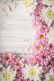 Frame of  white and pink flower on the white wooden table vertical Royalty Free Stock Photo