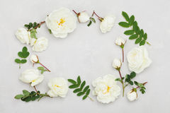 Frame of white rose flowers and leaves on light gray background from above, beautiful floral pattern, vintage color, flat lay. Frame of white rose flowers and Royalty Free Stock Images