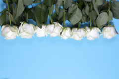 The Frame of white roses on a blue background Royalty Free Stock Image