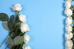 The Frame of white roses on a blue background Royalty Free Stock Photo