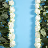 The Frame of white roses on a blue background Royalty Free Stock Photography