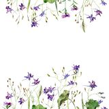 Frame of wild blue field watercolor flowers royalty free illustration
