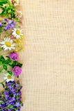 Frame of wild flowers on sackcloth 2 Stock Photos