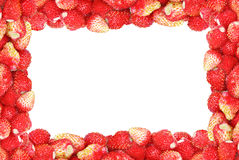Frame of wild strawberry isolated on a white background.  stock photos
