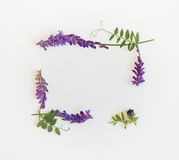 Frame of wildflowers and herbs. Top view. Stock Photography