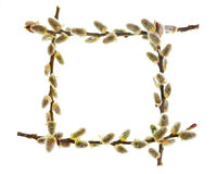 The frame of willow branches. Isolated on white background Royalty Free Stock Images