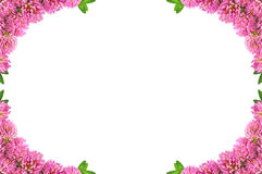 Free Frame With Clover Stock Photos - 20390553