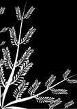 Frame With Fern Black Royalty Free Stock Photos