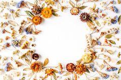 Free Frame With Yellow Dry Flowers, Branches, Leaves And Petals On White Background Stock Photography - 71675292