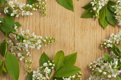 Frame with wood texture and bird cherry branch. Stock Images