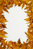 Frame of  yellow autumn leaves Stock Image