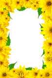 Frame with yellow flowers Royalty Free Stock Photos