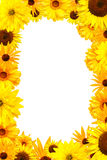 Frame with yellow flowers Royalty Free Stock Photography