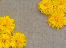 Frame of yellow flowers against a background of rough cloth Royalty Free Stock Images