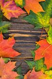 Frame of yellow, green and red autumnal colored maple leaves on wooden background. Fall foliage Stock Photography