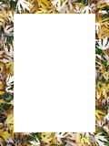 Frame of yellow leaves Royalty Free Stock Images