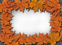 Frame from the yellow leaves on the grey Stock Photos