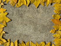 Frame with yellow leaves on stone Stock Photo