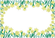 Frame from yellow narcissi Stock Images
