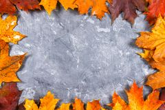 A frame of yellow and orange autumn maple leaves on gray dark concrete. Empty place for text. Top view. A frame of yellow and orange autumn maple leaves on gray Stock Photo