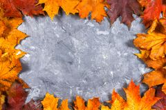 A frame of yellow and orange autumn maple leaves on gray dark concrete. Empty place for text. Top view. A frame of yellow and orange autumn maple leaves on gray Stock Images