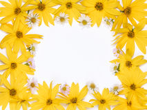 Frame of yellow and pink flower Royalty Free Stock Photos