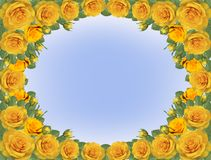 Frame of yellow roses. A frame of yellow roses against the blue sky Royalty Free Stock Images
