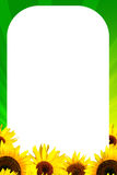 Frame with yellow sunflower Stock Photos