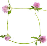 Frame from young flower of pink clover Royalty Free Stock Photography