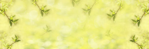 Frame of young green leaves. Spring background, banner. Stock Photography