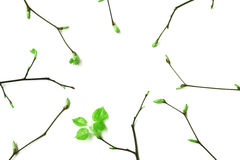 Frame of young spring branches with leaves Royalty Free Stock Photos