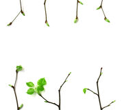 Frame of young spring branches with leaves Stock Photos