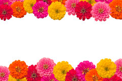 Frame of Zinnias flower. Isolated on white background Royalty Free Stock Photography