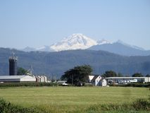 Framed by agricultuiral lands in front, Mt. Baker looms in the background. Snow capped Mt. Baker in Washington is visible in the blue skies as a large farm with royalty free stock image