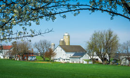 Framed Amish Farm. Amish farm framed by a tree stock image
