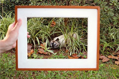 Framed Cat Stock Photos