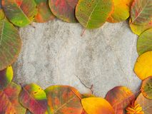 Framed colored autumn leaves background on the. Colorful autumn leaves background on the stone Royalty Free Stock Photo