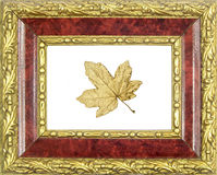 Framed gilded maple leaf Royalty Free Stock Photography