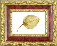 Framed gilded poplar leaf Royalty Free Stock Photos