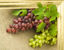 Framed grapes Stock Image