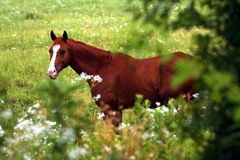 Framed Horse. Horse framed by wilflowers and trees in Cowley County in Eastern Kansas stock photography